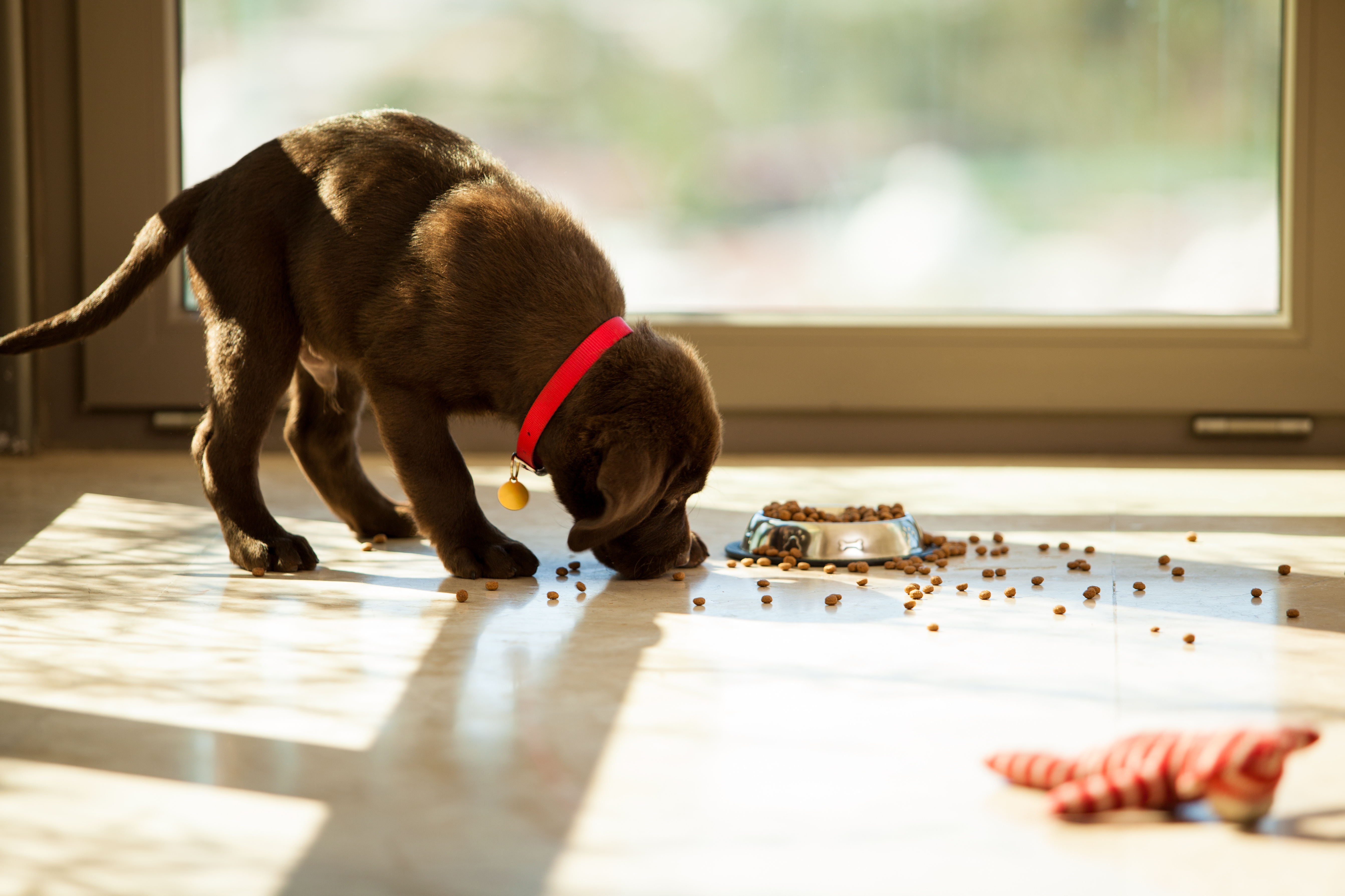 Is beneful dog food killing your dog lawcall Dog will eat out of hand but not bowl